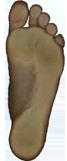 Fussscan Beispiel Bild